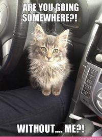 Poor kitty! Just a reminder: For your safety and the safety of your pets, never travel with a pet who is not properly restrained. Cats should be in an approved carrier, and dogs should either be buckled in a specialty car harness or secured in a travel cr...