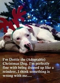 Dottie the Adoptable DogDottie is our foster dog. She is absolutely okay with being dressed up in costumes and left her�€�View Postshared via WordPress.com