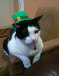 st paddy cats