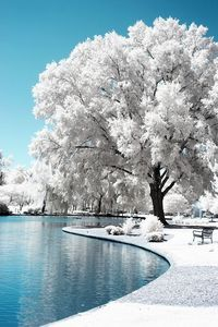 """Infrared Photography """"Relax"""" by Chris Summerville"""