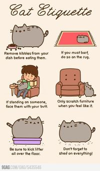 The Cats' Secrets #cute #cat