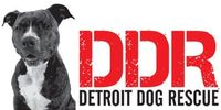 making days brighter for dogs in detroit