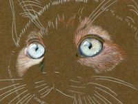 steps Karen used to create a realistic cat drawing using colored pencils on mat board.