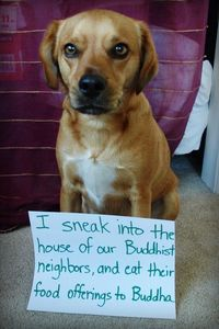 Buddha Beagle I sneak into the house of our Buddhist neighbors, and eat their food offerings to BuddhaView Post