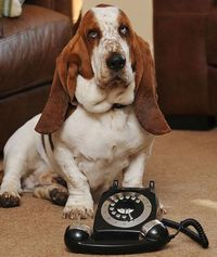 Choking dog dials for help