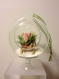 hanging glass ball, cute plant seated on a beach chair, just the perfect example of master piece