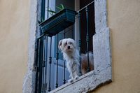 : #Dog #Portugal #window ~ Photo by Photographer joao barros - photo.net