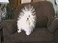 Static electricity and dog. Very funny.