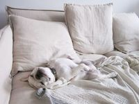 comfy-dog-bed-white