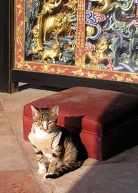 Cat in Temple, a photo from Hong Kong, South | TrekEarth