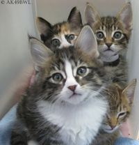 Cat, Catty, Kitty & Kitten