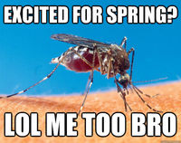 Excited for spring?