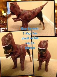 The best dog costume ever!!