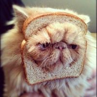 Cat with face in bread.